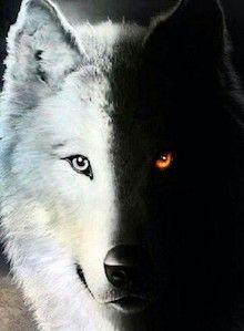 lobos-mens-venilia